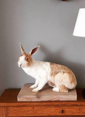 Opgezet konijn