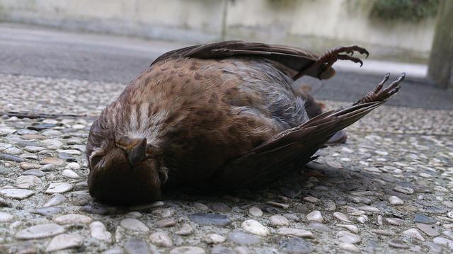 Een dood dier gevonden, wat te doen?