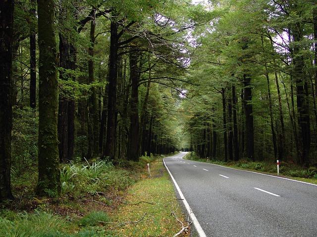 road-572933_640