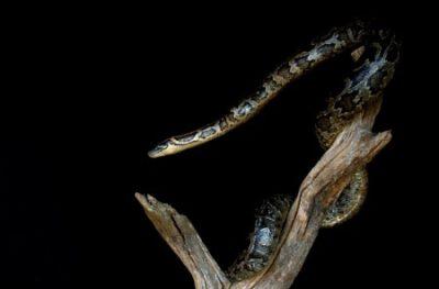 opgezette slang